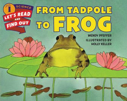From Tadpole to Frog B2703