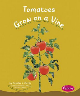 Tomatoes Grow on a Vine B8336