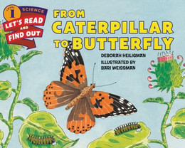 From Caterpillar to Butterfly B1903