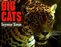 BIG CATS, Simon B0956