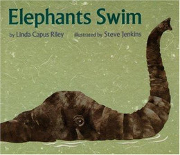 Elephants Swim B1235