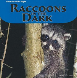 Raccoons in the Dark B8342